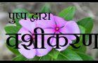 Pushp Vashikaran